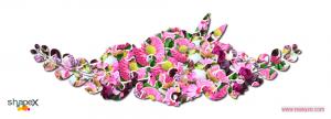 flower_2_res