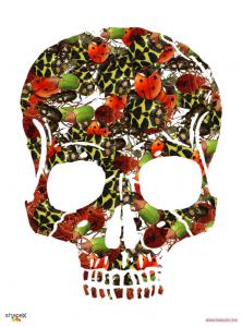 skull_1_res
