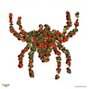 spider_res